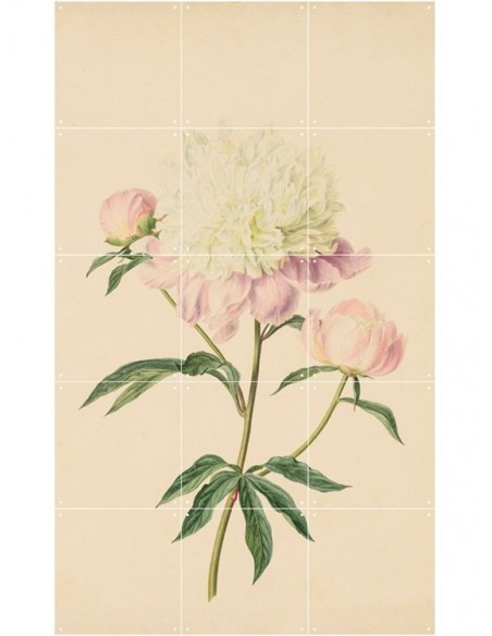 Tableau Botanicals -Large - 100*140- Gerard van Spaendonck & Pierre François Legrand